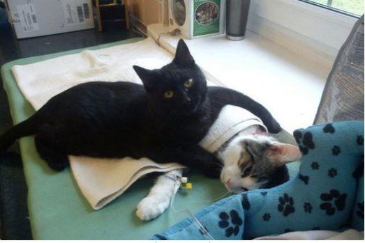 chaton infirmier le top