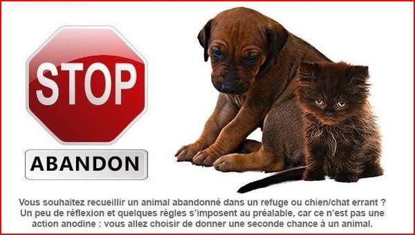 STOP ABANDON