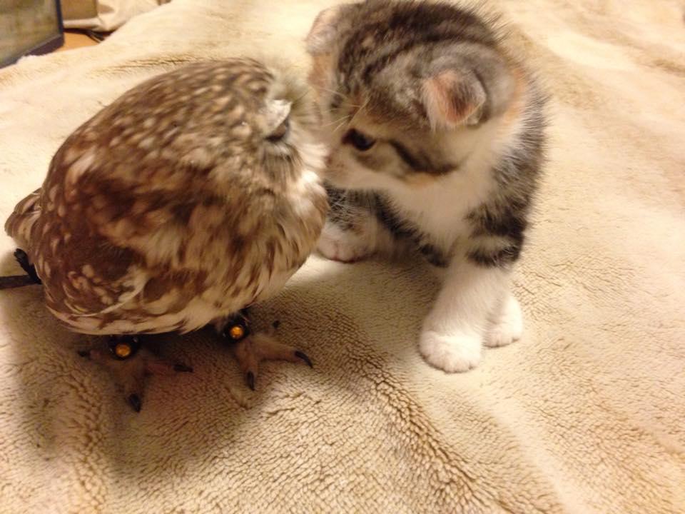 Chat, cest chouette!: Chat , chouette et petit oiseau